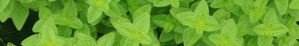 柔らかい緑